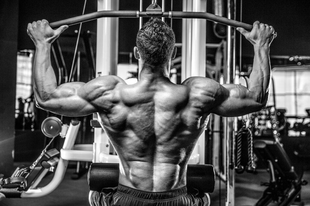 muscule11